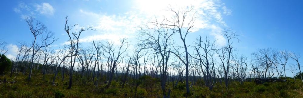 lyn pano trees