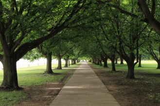 Southbank Trees
