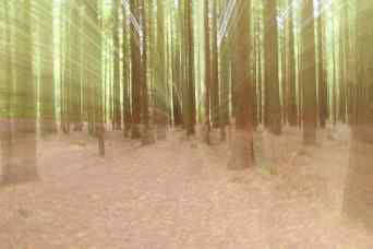 In The Forest ICM