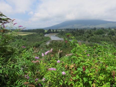 River View 4