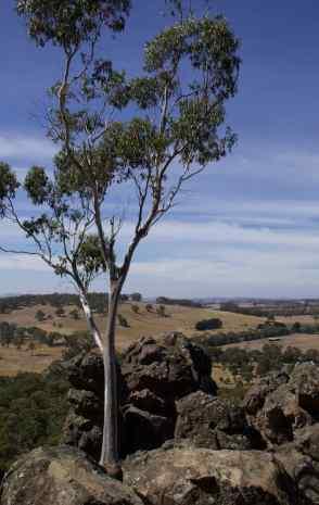 Lone tree Hanging Rock