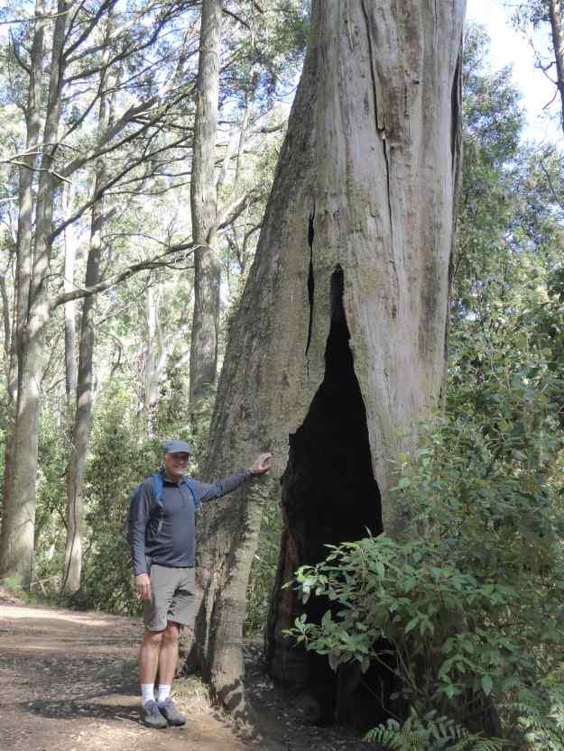Me at Eucalyptus Tree