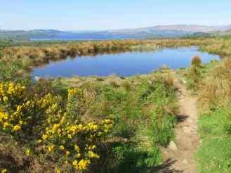 Pond with Loch Lomond