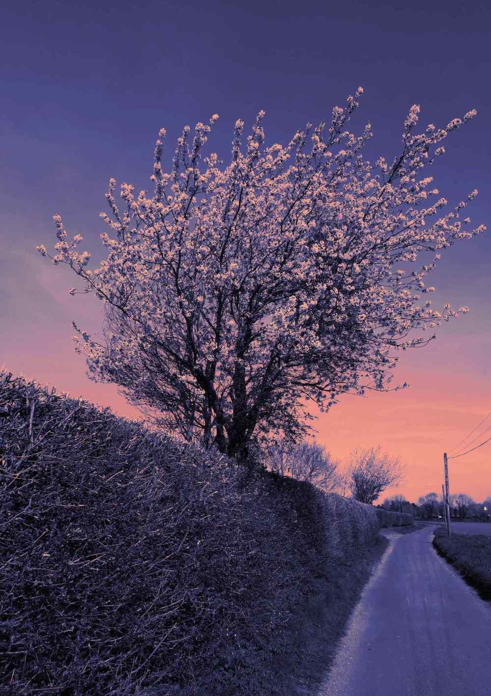 4 Apr 2020 Blossom Lane Processed.